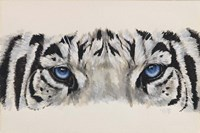Eye-Catching White Tiger Fine Art Print