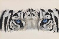 Eye-Catching White Tiger Fine Art Print