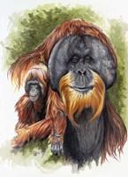 Orangutan Soul Fine Art Print