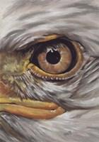 Eye-Catching Bald Eagle Fine Art Print