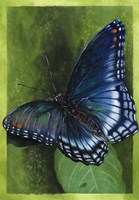 Jewel Tones Fine Art Print