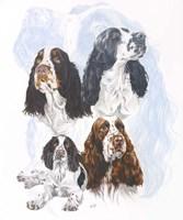 Springer Spaniel Fine Art Print