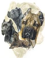 Cane Corso Fine Art Print