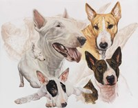 Bull Terrier with Ghost Image Fine Art Print