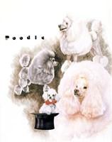 Poodle 2 Fine Art Print