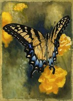 Delicate Belle Fine Art Print