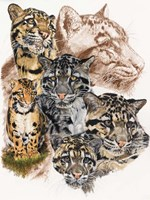 Clouded Leopard with Ghost Image Fine Art Print