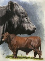 Angus Cattle Fine Art Print