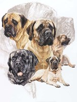 Bull Mastiff with Ghost Fine Art Print