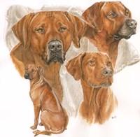 Rhodisian Ridgeback Fine Art Print