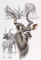 Kudu Fine Art Print
