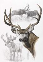 Mule Deer Fine Art Print