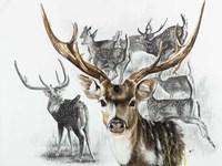 Axis Deer Fine Art Print