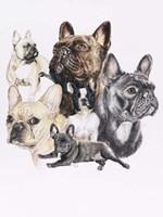 French Bulldog Fine Art Print
