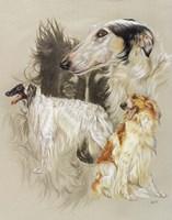 Borzoi Fine Art Print