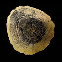 Gold Foil Tree Ring IV on Black Fine Art Print