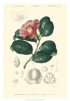 Floral Botanique II Fine Art Print