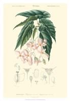 Floral Botanique III Fine Art Print