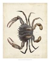 Vintage Crab I Fine Art Print