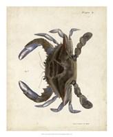 Vintage Crab II Fine Art Print