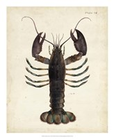 Vintage Lobster Fine Art Print