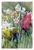 Spring at Giverny III Fine Art Print