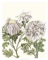 Early Spring Chrysanthemums I Fine Art Print