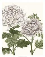 Early Spring Chrysanthemums III Fine Art Print