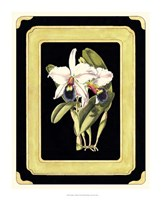 Orchids on Black I Fine Art Print