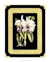 Orchids on Black II Fine Art Print