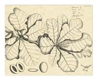 Vintage Leaf Study I Fine Art Print
