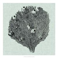 Serene Coral IV Fine Art Print