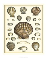 Of Sea and Shore III Fine Art Print