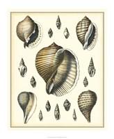 Of Sea and Shore IV Fine Art Print