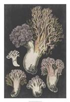Genus Clavaria I Fine Art Print