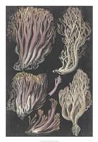 Genus Clavaria II Fine Art Print