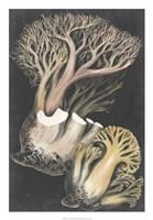 Genus Clavaria III Fine Art Print