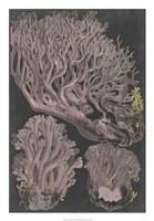 Genus Clavaria IV Fine Art Print