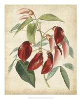 Tropical Floral I Fine Art Print