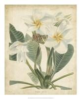 Tropical Floral II Fine Art Print