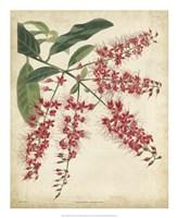 Tropical Floral III Fine Art Print