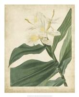Tropical Floral IV Fine Art Print
