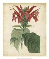 Tropical Floral V Fine Art Print