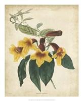 Tropical Floral VI Fine Art Print