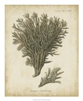 Esper Antique Coral III Fine Art Print