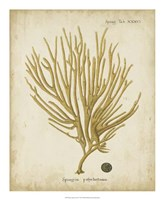 Esper Antique Coral IV Fine Art Print