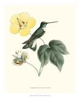 Hummingbird & Bloom I Fine Art Print