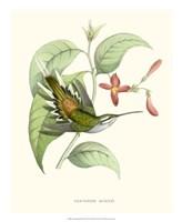 Hummingbird & Bloom III Fine Art Print