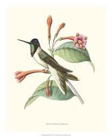 Hummingbird & Bloom IV Fine Art Print