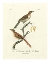 Antique French Birds I Fine Art Print